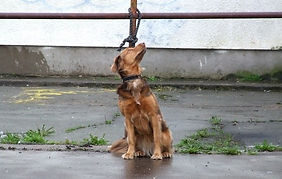 abbandono-cane.jpg