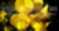Capture d'écran 2019-04-13 à 20.02.53.pn