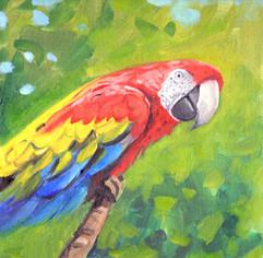 Parrot02.jpg