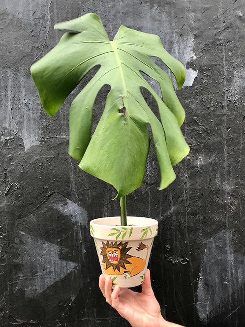 'Lion' White Hand Painted Terracotta Plant pot by Anna Soba