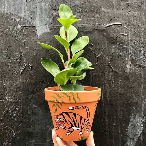 'Chunky Boi' Hand Painted Terracotta Plant pot by Anna Soba