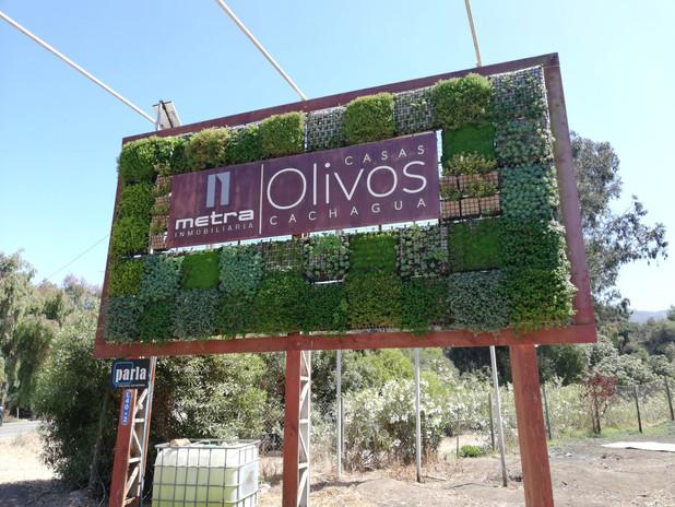 Olivos 9.jpg