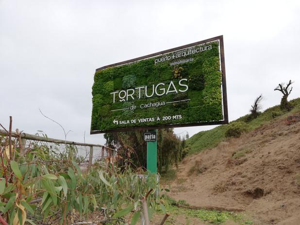Tortugas 2.jpg