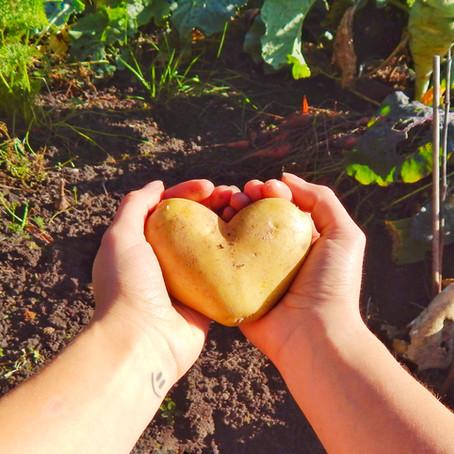 5 Tipps gegen Lebensmittelverschwendung, die jeder kennen sollte.
