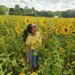 Sunflower janks