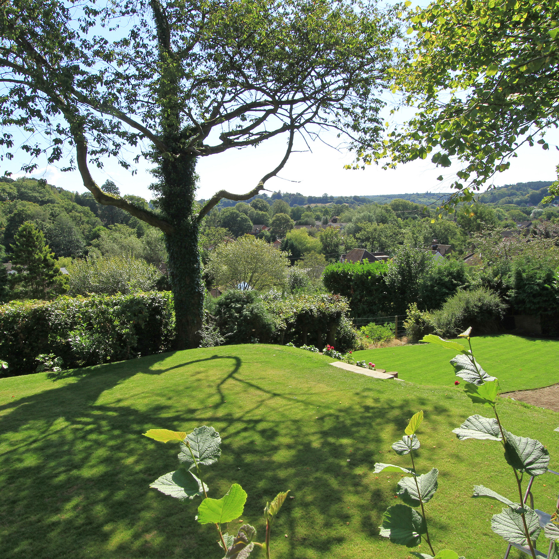 View of Blackdown Haslemere