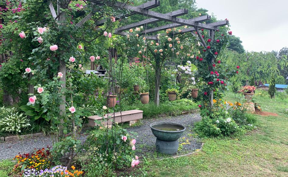 つるバラとパーゴラのある庭