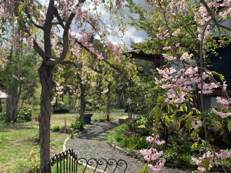 カフェギャラリー桜ヶ丘オープン致しました。