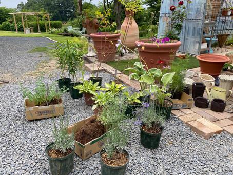 6月15日 花壇植栽工事の一日
