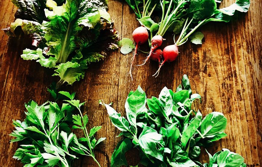 菜園花壇で採れたハーブや野菜