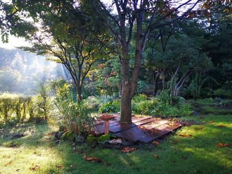 今朝の桜ヶ丘