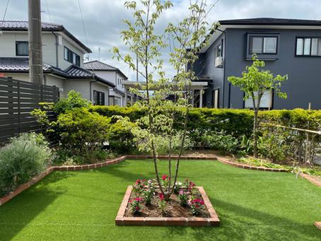 お庭の全面改修工事・完成から二年目のお庭を訪問