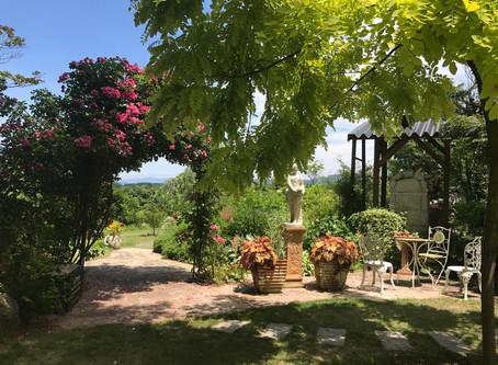 桜ヶ丘の自然で育ったハーブ