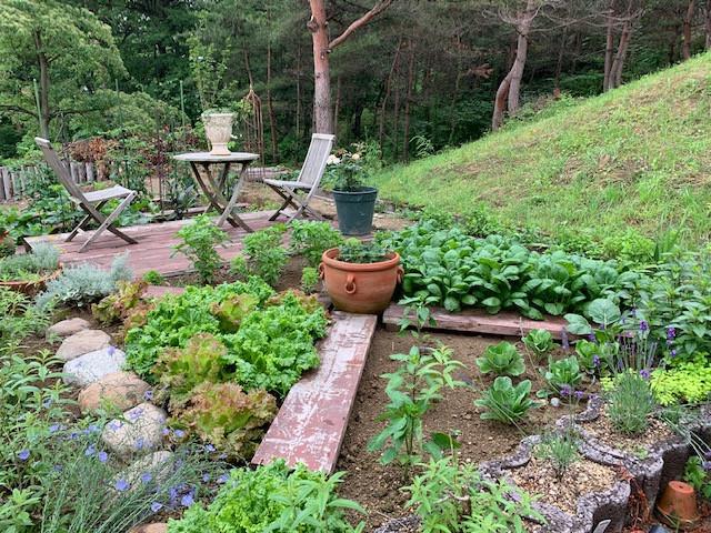 ハーブ菜園花壇