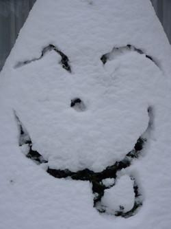 Sourire de neige...