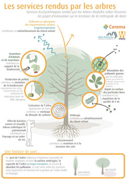 Effets arbres