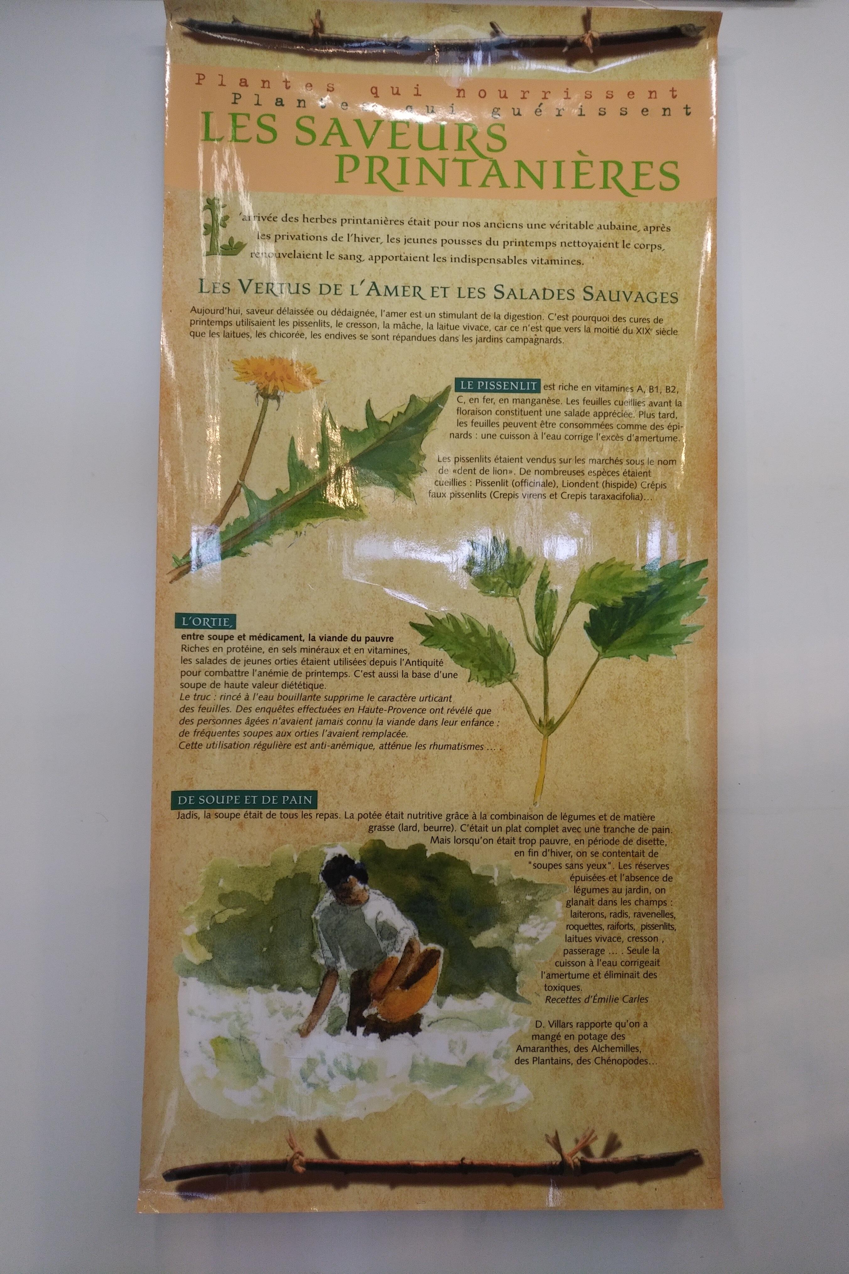 Plantes qui guerissent