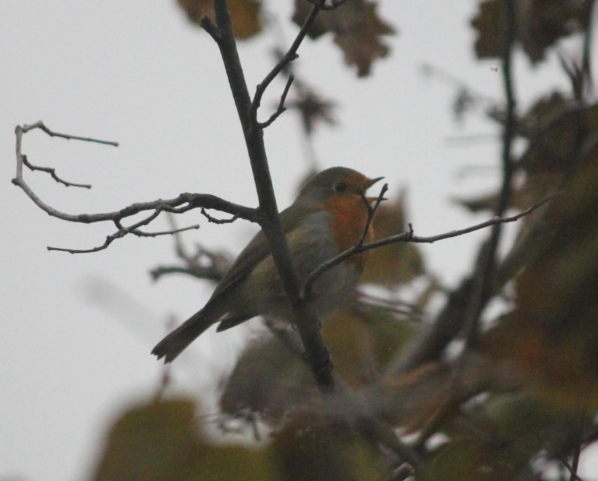 Bienfait des chants d'oiseaux
