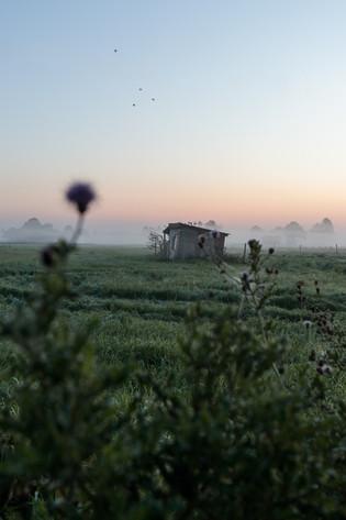Sonnenaufgang im Moor von Buxtehude