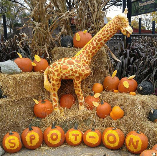 Giraffe Pumpkin Display