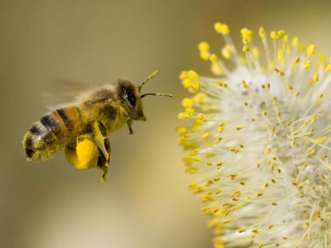 Beautiful Bee Pollen!