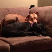 Lexi & Ryder
