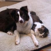 Jiffer & Miss Kittie