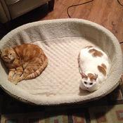 Steve and Tiny Cat