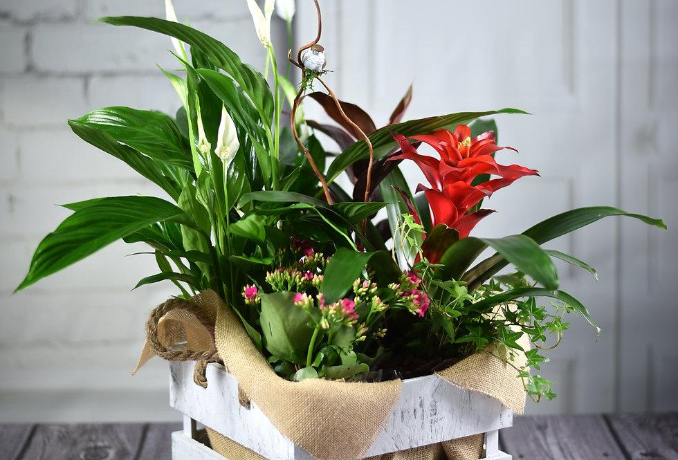 Caja de madera con plantas ( 35€ - 45€ )
