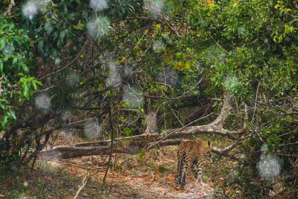 Safari with Saman 1 LR-27.jpg