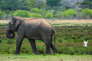 Safari with Saman 1 LR-58.jpg