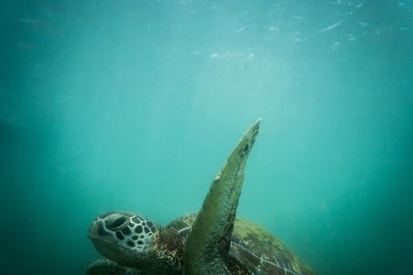 Wildest Turtle beach-28.jpg