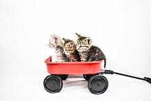 KittensKRF.jpg