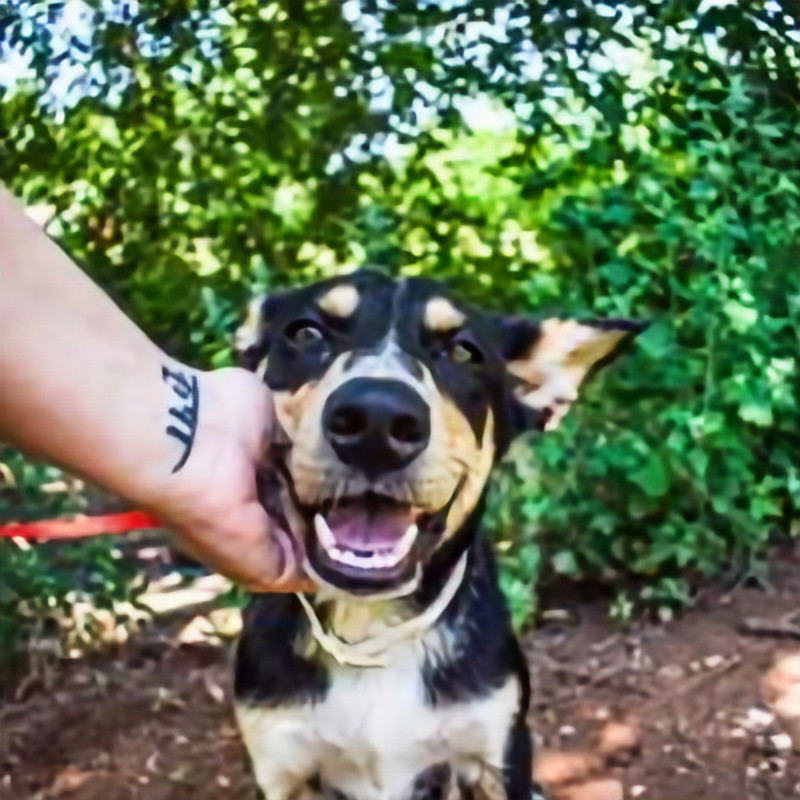Adoption Event - Hollywood Feed in SW OKC