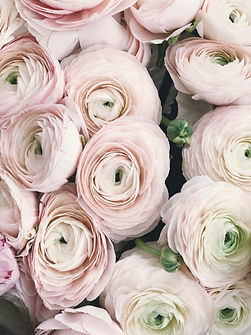 close-up-photography-of-pink-petaled-flo