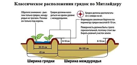 митлайдер_грядки_схема_обрезкасада.рф.pn