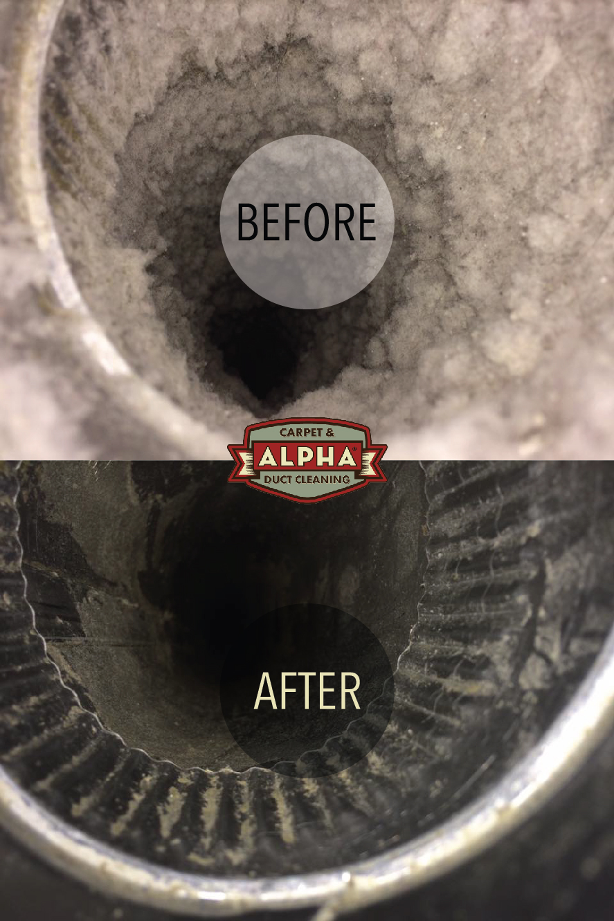 Alpha Carpet & Duct Cleaning Before & Af