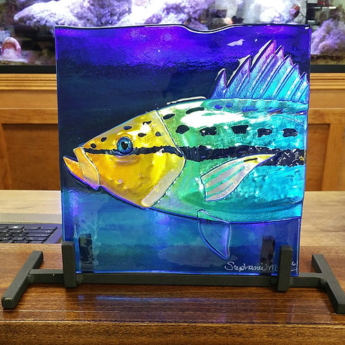 Yellowtail on cobalt 8 by 8