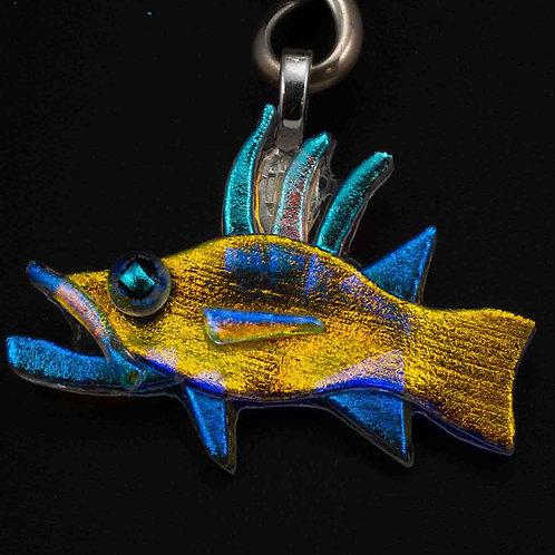hogfish 3