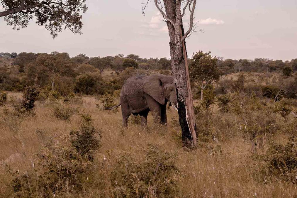 Elefante-Kruger-4-.jpg