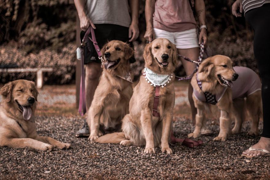 Família Golden Elas.me  .jpg
