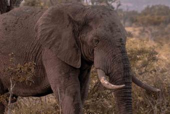 Elefante-Kruger-9-.jpg
