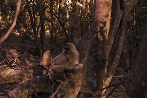 macaco-branco-.jpg