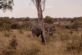 Elefante-Kruger-5-.jpg