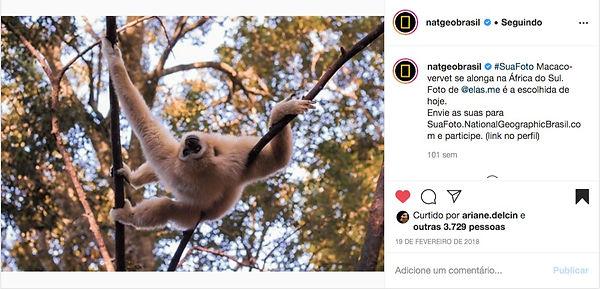 Captura_de_Tela_2020-01-28_a%CC%80s_11.5