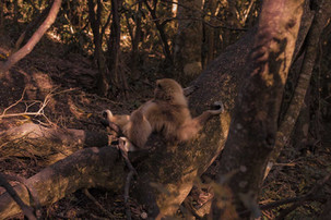 macaco-branco-2.jpg