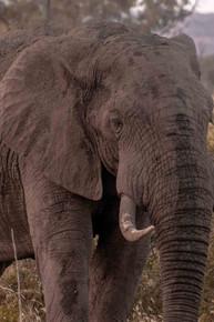 Elefante-Kruger-10-.jpg