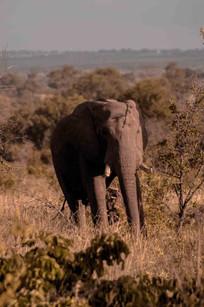 Elefante-Kruger-12-.jpg