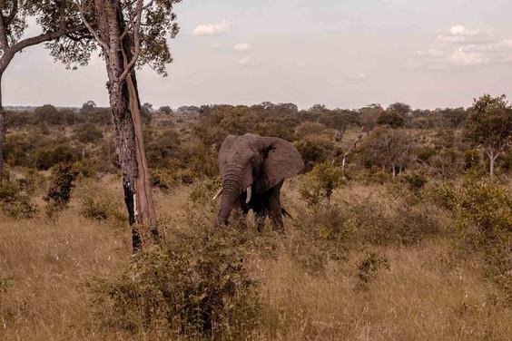 Elefante-Kruger-7-.jpg