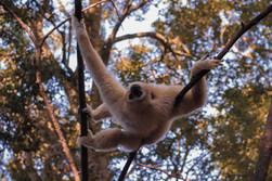 macaco-branco-3.jpg